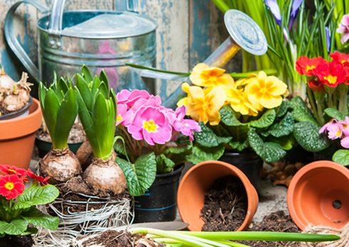 Wir starten in den Frühling